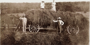 Making hay on the old farm