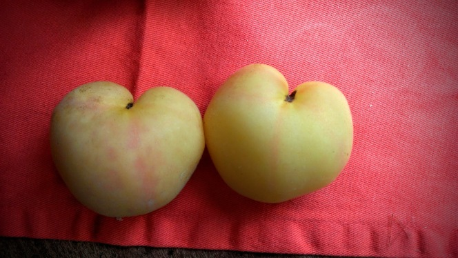 garden peach