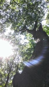 treelabyrinth