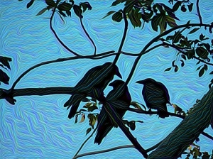 crows1