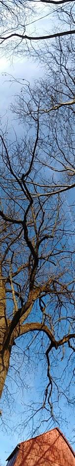 barntree